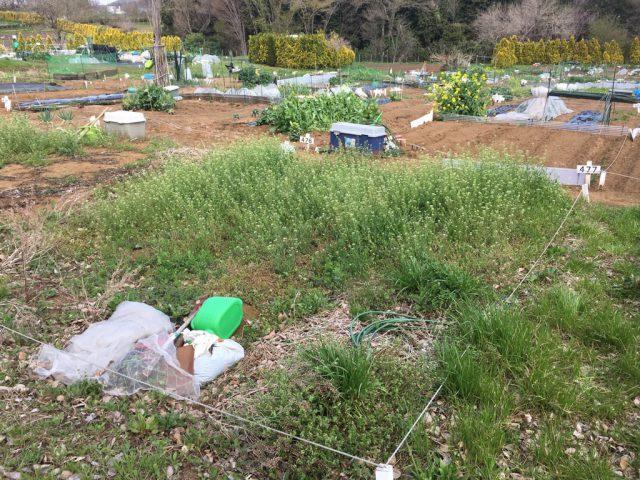 雑草が伸び放題のシェア畑