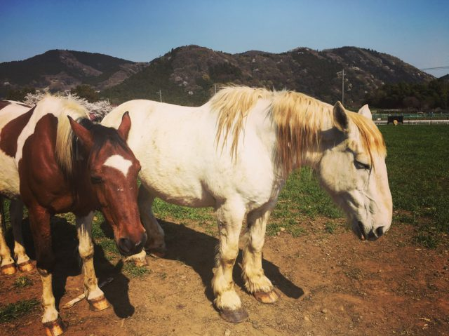 子供遊び場 服部牧場の馬