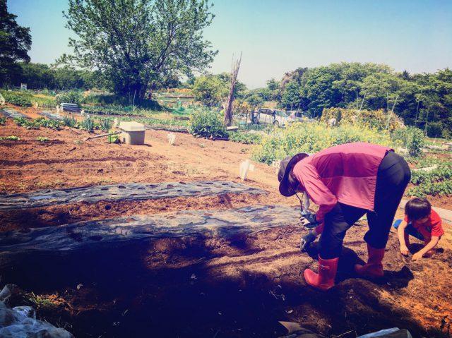 シェア畑で農作業をする親子