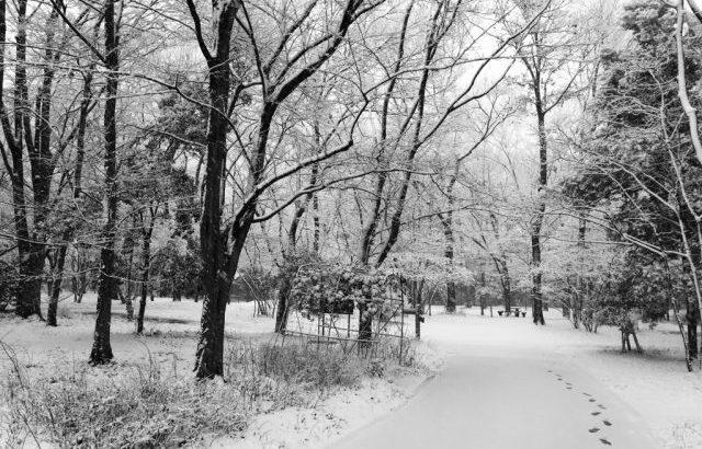 音楽のある生活「こんな雪の日はどんな曲が聴きたくなりますか」