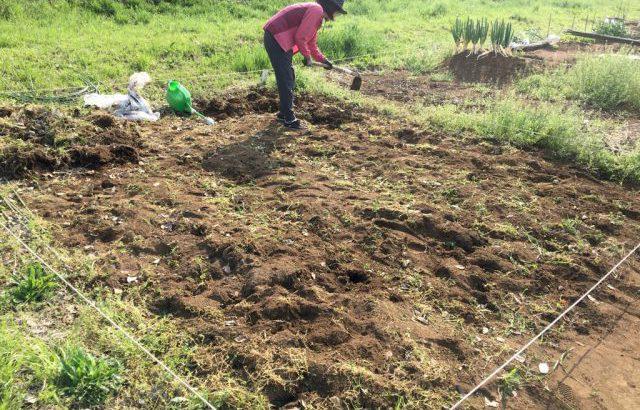 シェア畑でおじいさんに怒られる「雑草は責任もって自分で処理しよう」